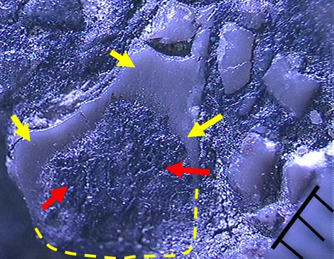 Figure 10b. Photomicrograph. Middle portion is still covered with asphaltic materials  (shown by red arrows).