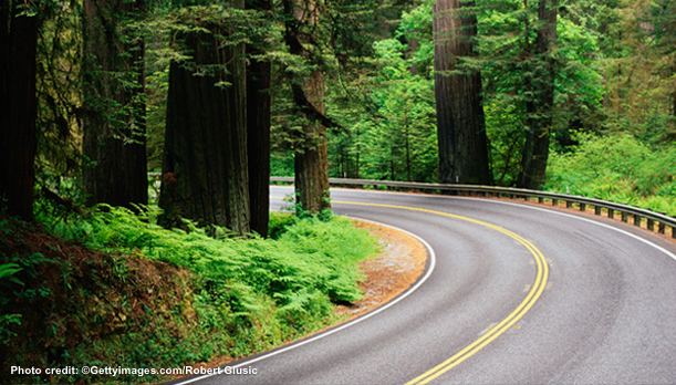 A picture of a winding road through a forest
